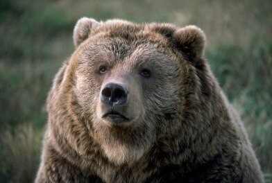 Stocks Enter Bear Market  What Does It Mean?